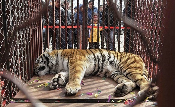 why should animals be kept in captivity It is an important debate whether animals should be kept in the zoos or not a list of arguments for and against zoos interact with the animals.